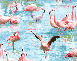 Fantastic Flamingos  Fabric